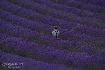 Lavender Fields-9
